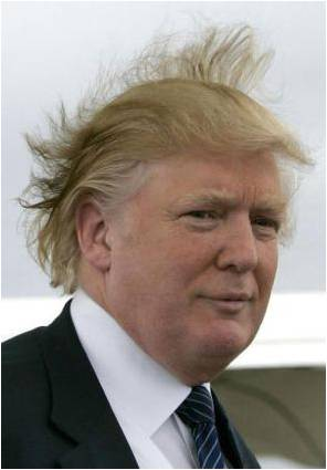 Should Trump's Hair or Business Acumen be Fired?!