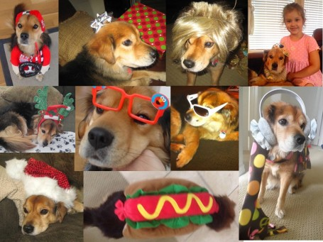Corky may not have liked it, but she played along with our costume abuse.