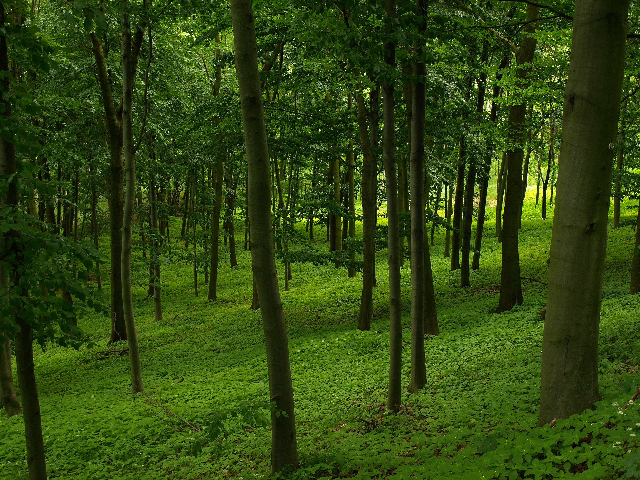 lo rewilding trees forests - HD1600×900