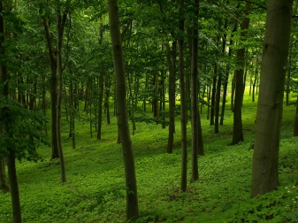 Forest Free Image